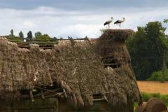 I miejsce w kategorii Gniazdo bocianie - Marek Leś - Znikające z krajobrazu