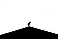 Andrzej Błoński_Bociani minimalizm_male